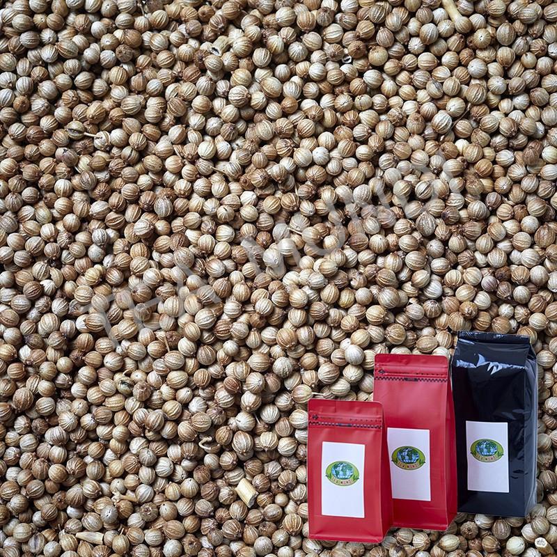 Cilantro semillas